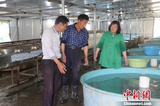 工人们正在鲟龙鱼孵化车间观察小鱼苗生长情况。 贾理江 摄