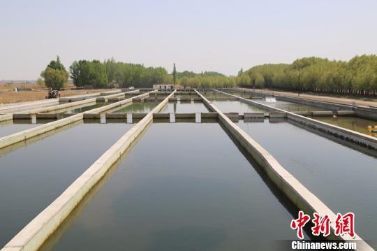 二二二团鲟龙鱼水产养殖基地建有24个养殖池。 贾理江 摄
