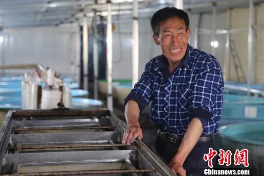养殖基地技术员王成江看着鲟龙鱼鱼苗,笑得很开心。 贾理江 摄