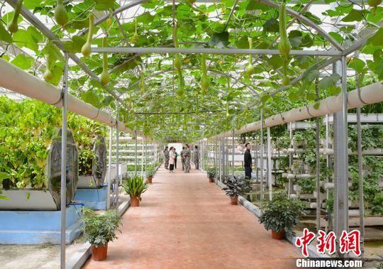 第三师四十五团青年连青创生态园的温室大棚内。 勉征 摄