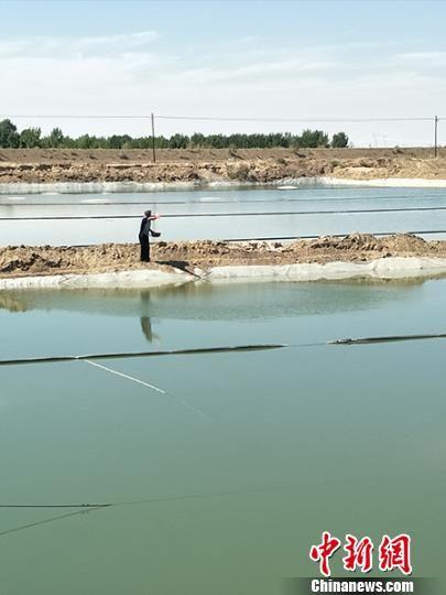 今年,罗云武共养殖有36亩水面,预计纯收入可达三四十万元。 黎佳君 摄
