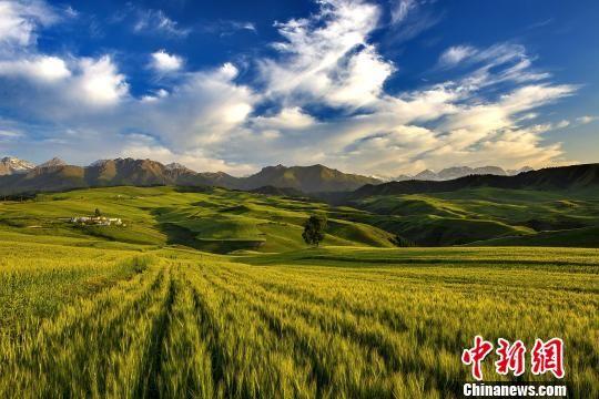 奇台江布拉克景区内万亩旱田。 奇台县委宣传部提供 摄