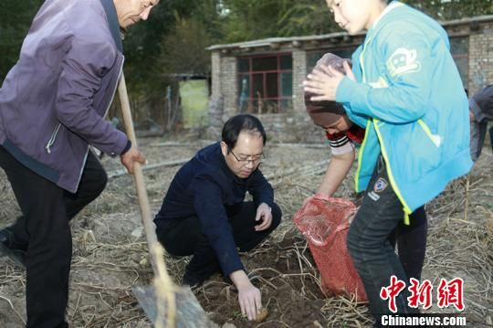 薛建忠和亲戚在一起收土豆。 承文明 摄