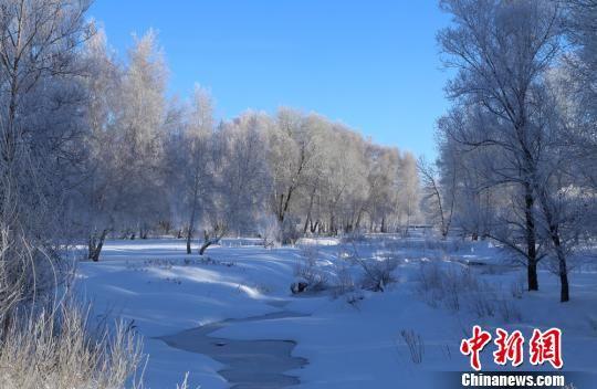 """""""醉美雪桦""""及当地民俗成为冬季冰雪旅游的亮点。 哈巴河县委宣传部供图 摄"""