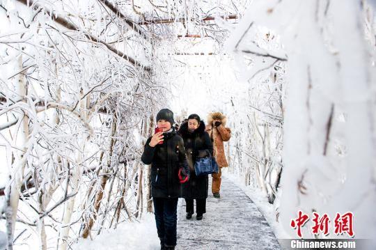 游客在哈巴河县白桦林景区内观光。 茹斯坦 摄