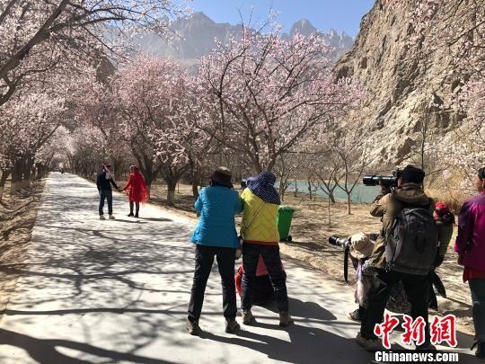 4月3日,游客正在杏花林中拍照。 勉征 �z