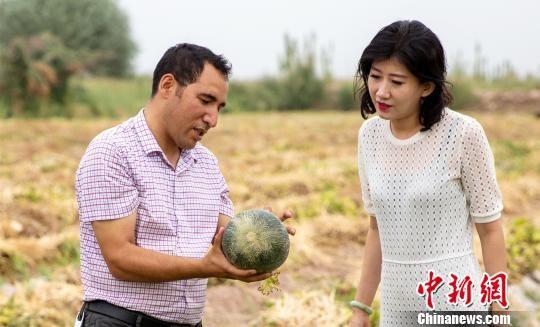 """新疆伽师县着力打造高质量特色农产品助推产业扶贫。图为伽师县卧里托格拉克镇副镇长艾麦提・图尔孙18日在田间为""""熊猫指南""""副总裁马�t介绍伽师瓜种植情况。 邢一 摄"""