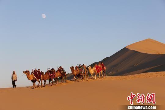 骑骆驼游沙漠成为一八五团旅游一大亮点。 杨东东 摄