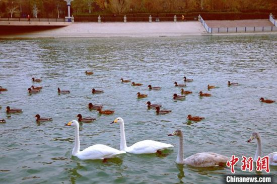 各种禽鸟相聚越冬,其乐融融。 杨厚伟 摄