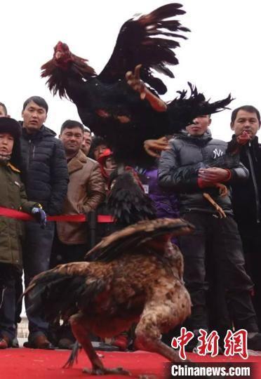 和静县2019年民间文化冰雪旅游节,牧民展示驯鹰。 史玉江 摄