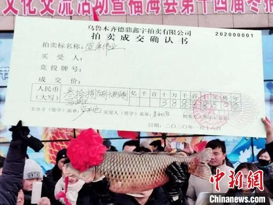 新疆(jiang)福(fu)海冬(dong)捕�(jie)�^�~以38.8888�f的�r(jia)格(ge)成交。 拍客老李 �z