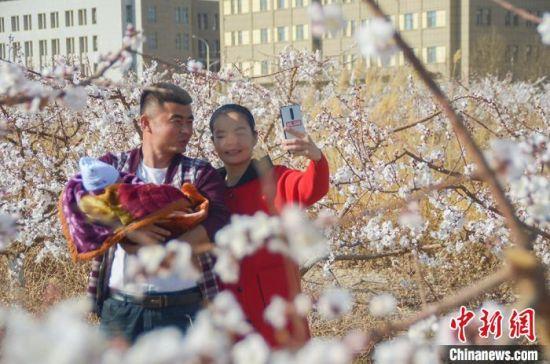 在吐鲁番的一片杏花中,一家三口赏花自拍。 苟继鹏 摄