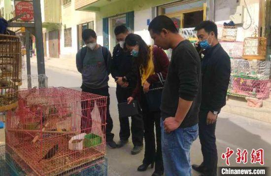 阿克苏地区查获3起涉嫌违法经营野生动物案。 潘志安 摄
