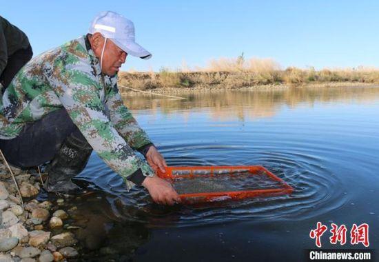 水产养殖户将一箱箱蟹苗小心翼翼地放入水中。 谭燕 摄