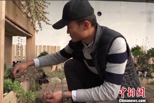 """新疆兵团创客青年利用""""废物""""种出""""多肉王国""""(图)"""