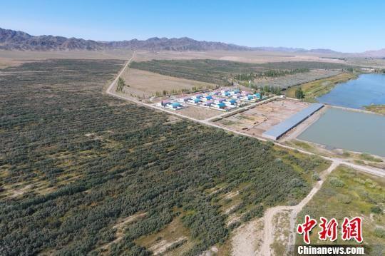 """新疆兵团人27年植树数万棵 为中蒙边境线披""""绿衣"""""""