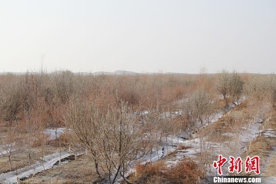 探访新疆阿拉尔沙漠之门:人进沙退生态环境持续改善