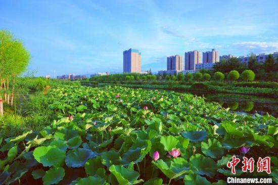 新疆戈壁荒滩上建湿地生态公园成民众休闲好去处(图)