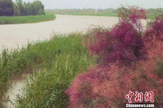 新疆塔里木河连年向下游生态输水 尾闾形成492平方公里湖面