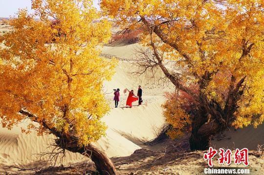 """新疆塔里木河沿岸胡杨林""""披黄挂金""""引游客"""