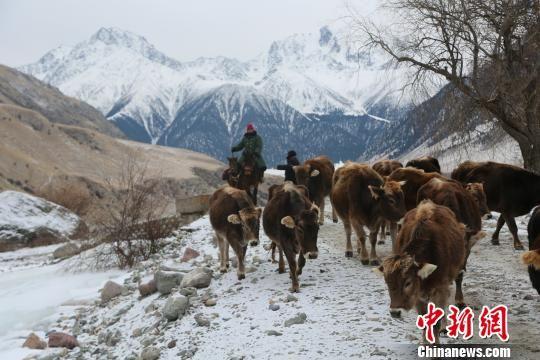 走进新疆伊犁阿合牙孜沟冬牧场