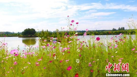 新疆阿克苏国家湿地公园成游客休闲好去处