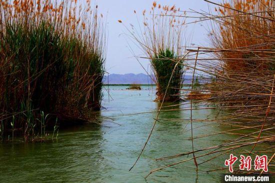 初夏新疆博斯腾湖美景如画 色彩斑斓