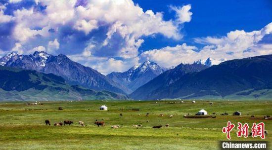 新疆草原最美盛夏时光 晨雾弥漫牧歌悠扬