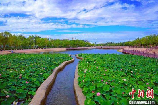 初秋新疆库尔勒白鹭河荷艳鹭舞 如江南水乡美景