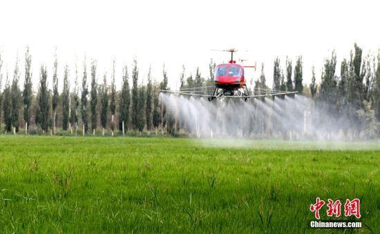 新疆农民青睐高科技产品用飞机洒农药