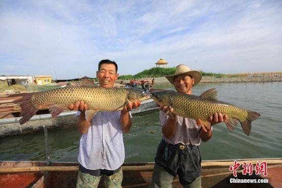 新疆博斯腾湖鱼儿满舱渔民乐