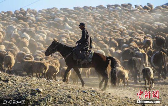 新疆哈萨克族牧民千里跋涉转场 场面恢弘