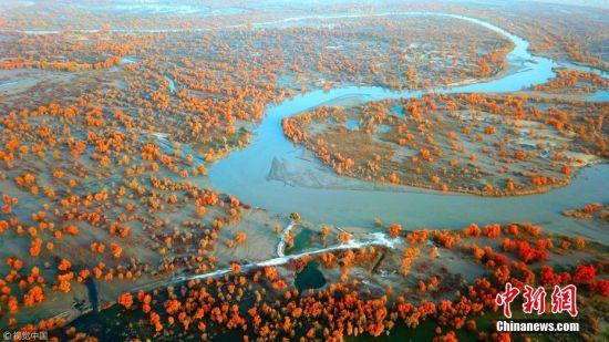 新疆塔里木现五彩斑斓秋景 胡杨林一片金黄
