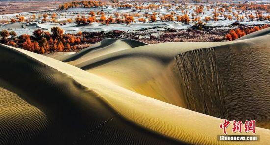 新疆塔里木河生态环境改善胡杨林生长茂盛