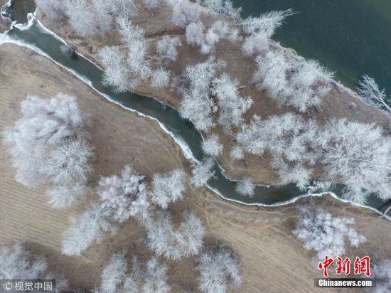 新疆额尔齐斯河现雾凇景观 河谷银装素裹宛如仙境