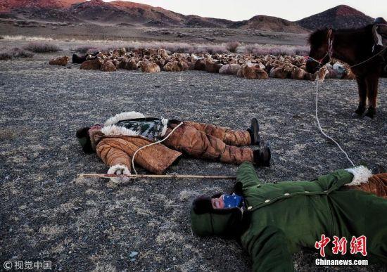 新疆哈萨克冬季转场 180公里要昼夜迁徙3天
