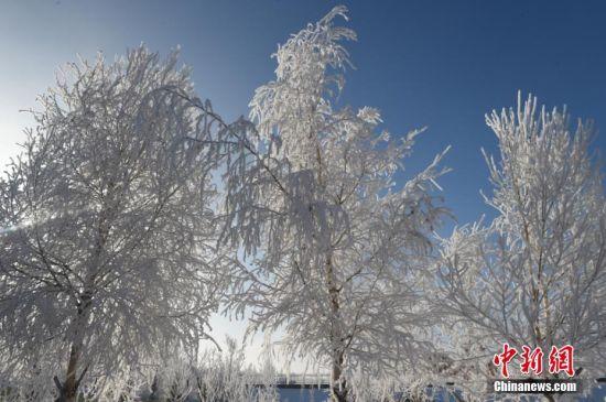 大雾降温过后 新疆阿勒泰现雾凇美景宛若仙境