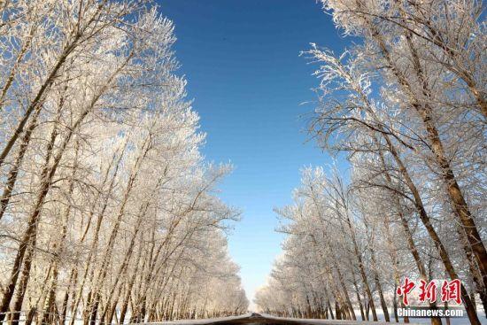新疆阿勒泰地区富蕴县出现雾凇美景