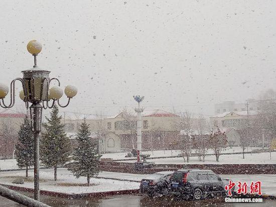 新疆北部突降大雪 气温降到零下5度