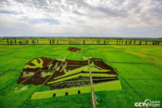 【新时代·幸福美丽新边疆】航拍新疆伊犁察布查尔县巨幅3D稻田画