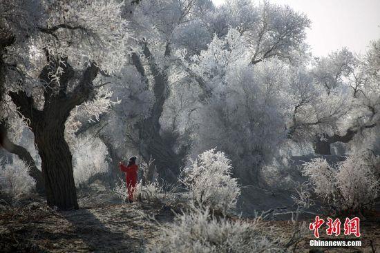 新疆塔克拉玛干沙漠胡杨雾凇美景迷人