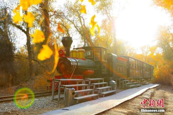 新疆轮台县逾40万亩胡杨林迎来最美季节