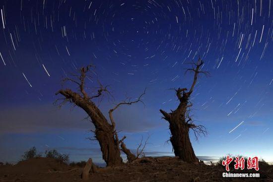 新疆塔里木盆地:星空下的千年胡杨