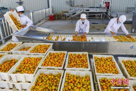 多组合帮扶模式并举 新疆英吉沙企业带动贫困农户致富