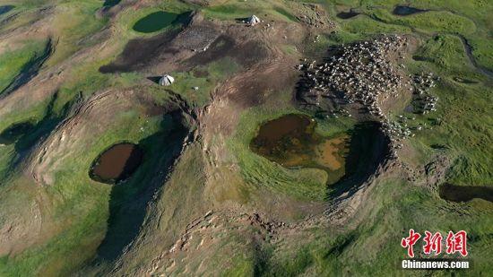 """""""转场""""新疆南部牧区 夏牧场成牛羊撒欢新天地"""