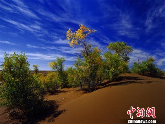阜康市的沙漠风光。阜康市旅游局供图