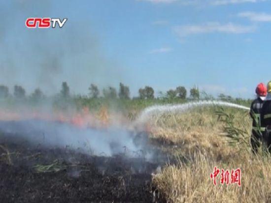 新疆吉木萨尔百亩麦地烧毁