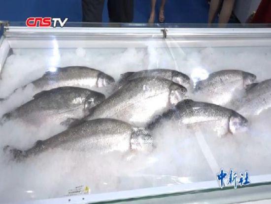 """借""""一带一路""""东风 乌鲁木齐也能吃到本地产三文鱼"""