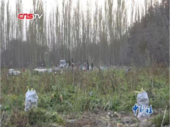 新疆和田地区庭院经济显效 农民增收有靠