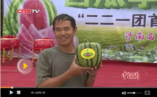 新疆种出方形西瓜 瓜农:价格非常可观